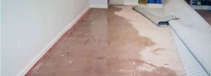 Same Day Carpet Flood Damage Restoration